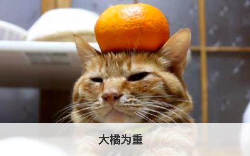 结算测试商品-按周期【除PD外禁止编辑修改】